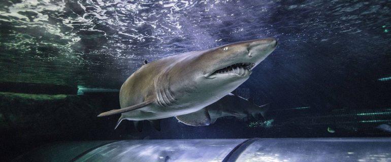 Teeth & Tails at SEA LIFE Sunshine Coast Aquarium