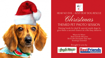Hear No Evil – Christmas Themed Pet Photoshoot Fundraiser