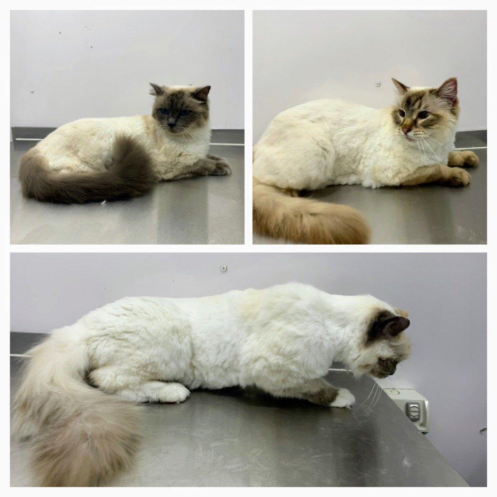 Fantastic Felines Cat Grooming